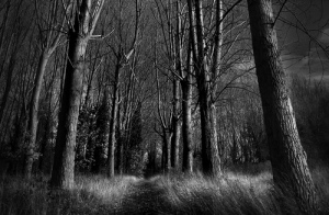 Woods at Night 1 by Chris Friel
